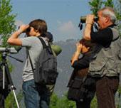 Birdwatching - Festival