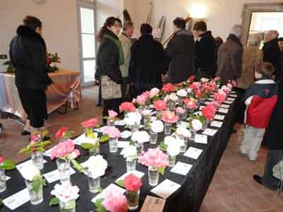 Kamelien-Ausstellung in Gravedona