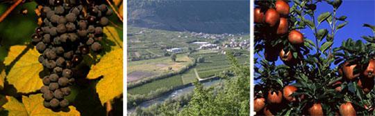 Sagra della Mela e dell'Uva in Villa di Tirano