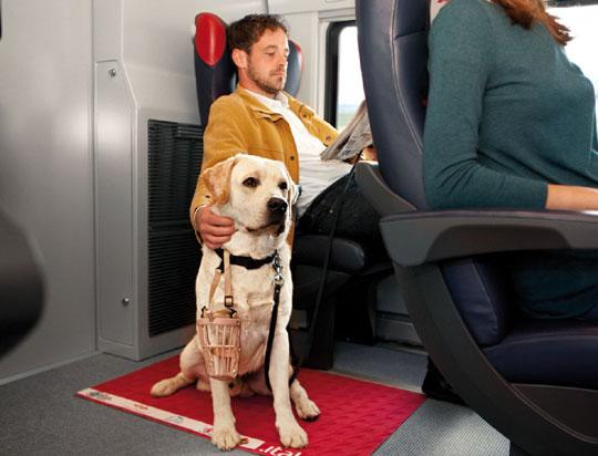 Tipps für Hunde-Halter bei Zugreisen  und Autobus
