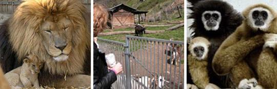 Zoo Al Maglio in Magliaso