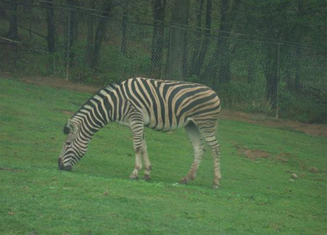 Safari Park Pompia