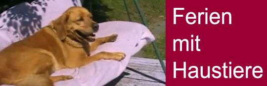 Urlaub mit Hund oder Haustier, was muss ich wissen?