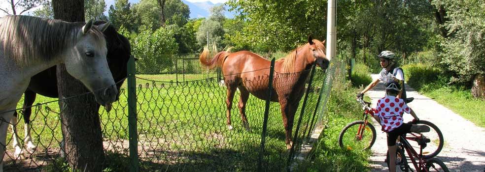 Im Naturreservat Pian di Spagna begegnen Sie auch Pferde.